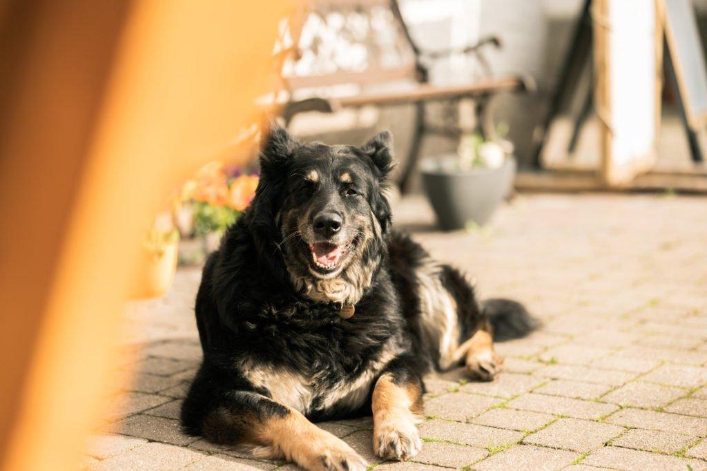 tvb-hallein-duerrnberg-erleben-geniessen-egglgut-hund