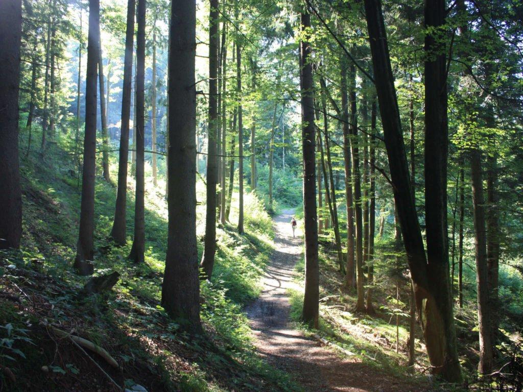 tvb-hallein-duerrnberg-wandern-wallbrunn-rundwanderweg-wald